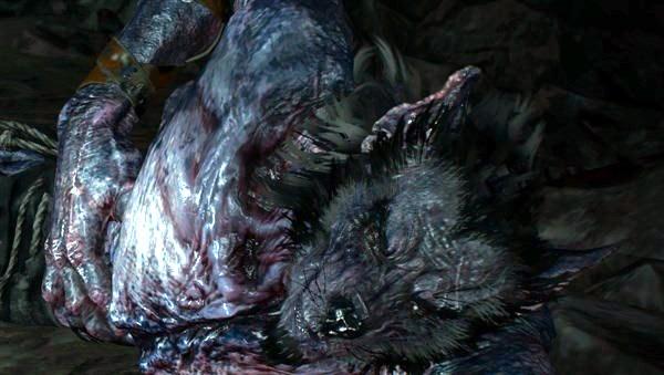 7- loups-barbus.png